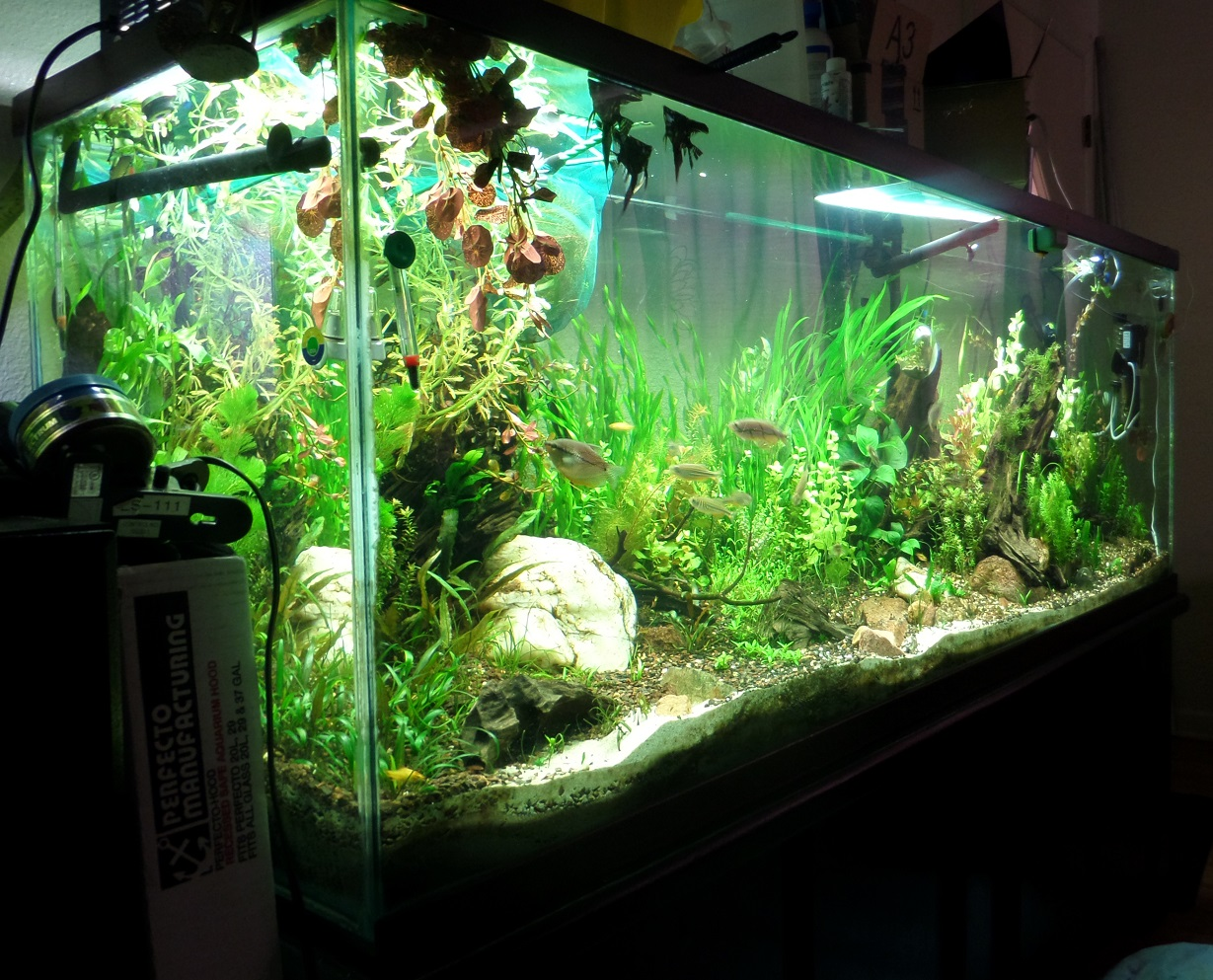 My 150 gallon freshwater planted community tank from for 150 gallon fish tank