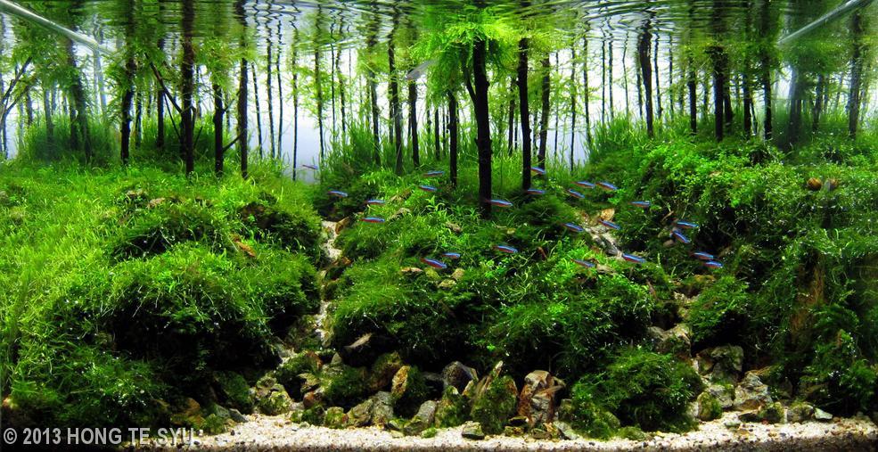 3790 My World Of Planted Freshwater Aquariums