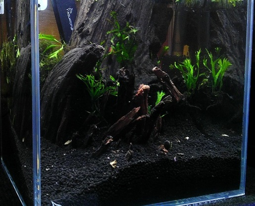 Hardscape and First Plants 3