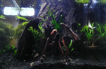 Hardscape and First Plants 4