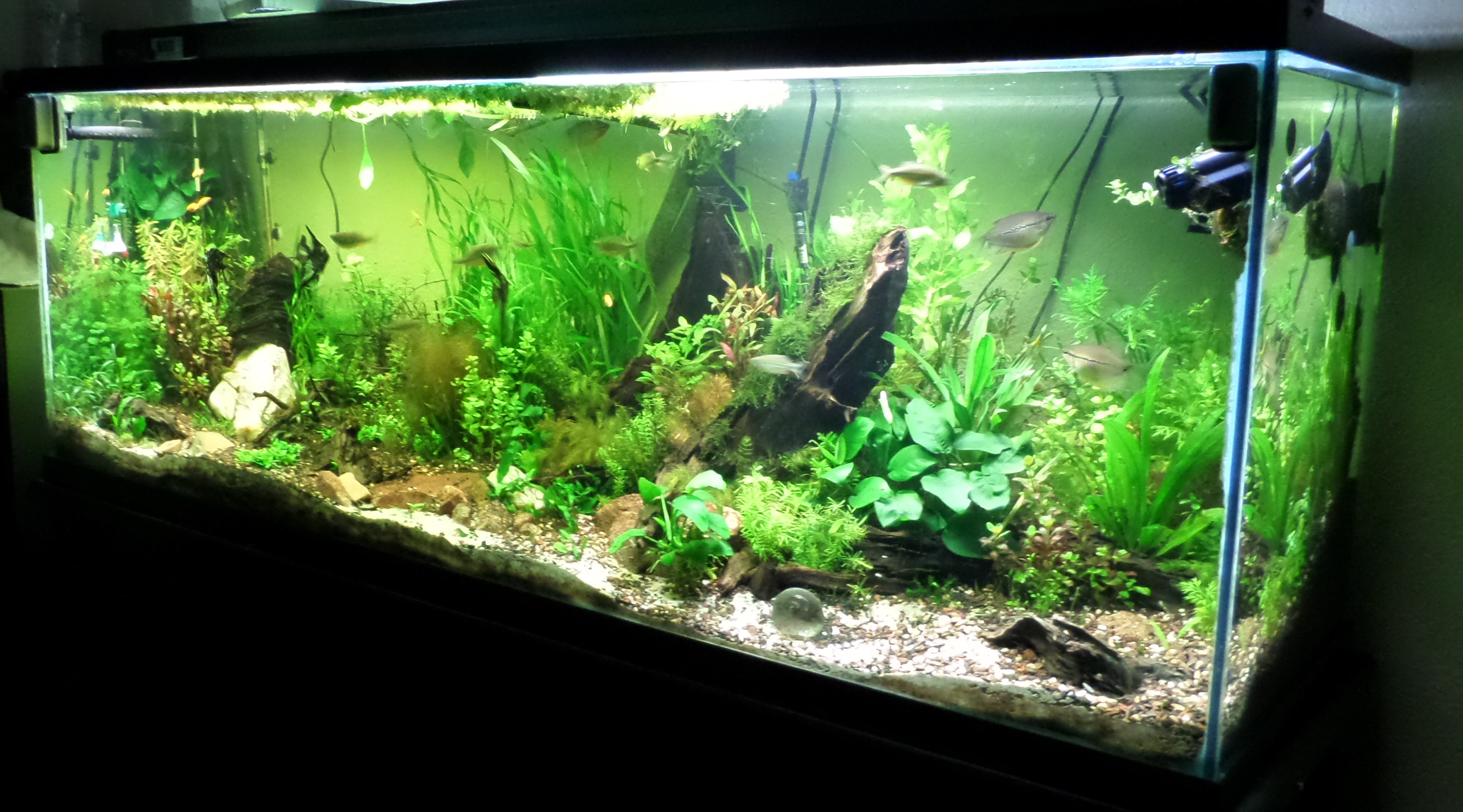 150 gallon community tank my world of planted for 150 gallon fish tank