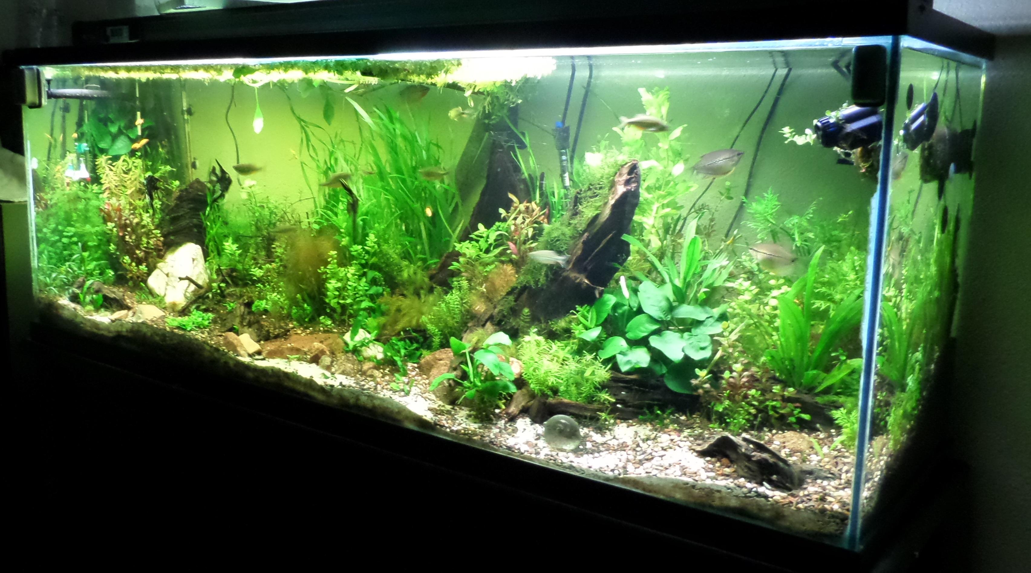 150 Gallon Aquarium : 150 Gallon - Community Tank My World of Planted Freshwater ...
