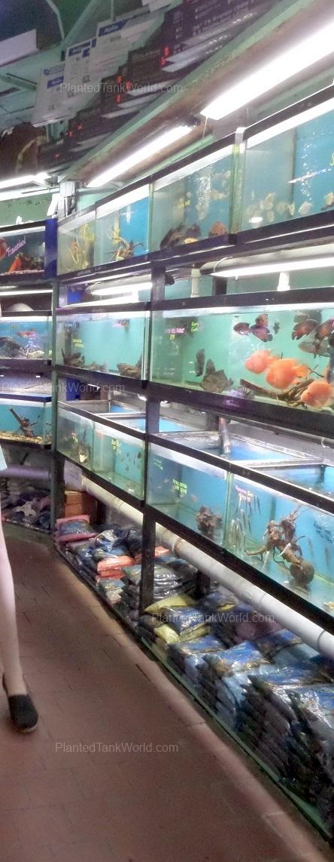 Pacific Aquarium Inc My World Of Planted Freshwater