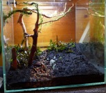Riccia andd java moss nets on the right