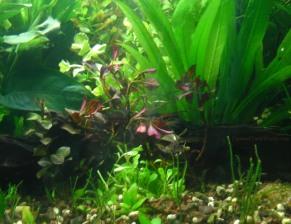 Planted bundle