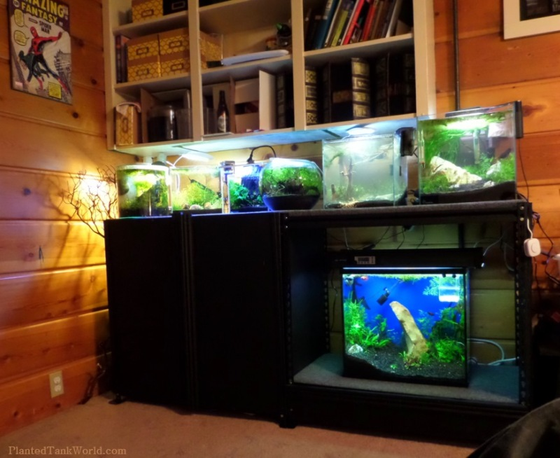 Diy 10 Gallon Fish Tank Stand Plans