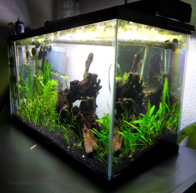 rhs   My World of Planted Freshwater Aquariums