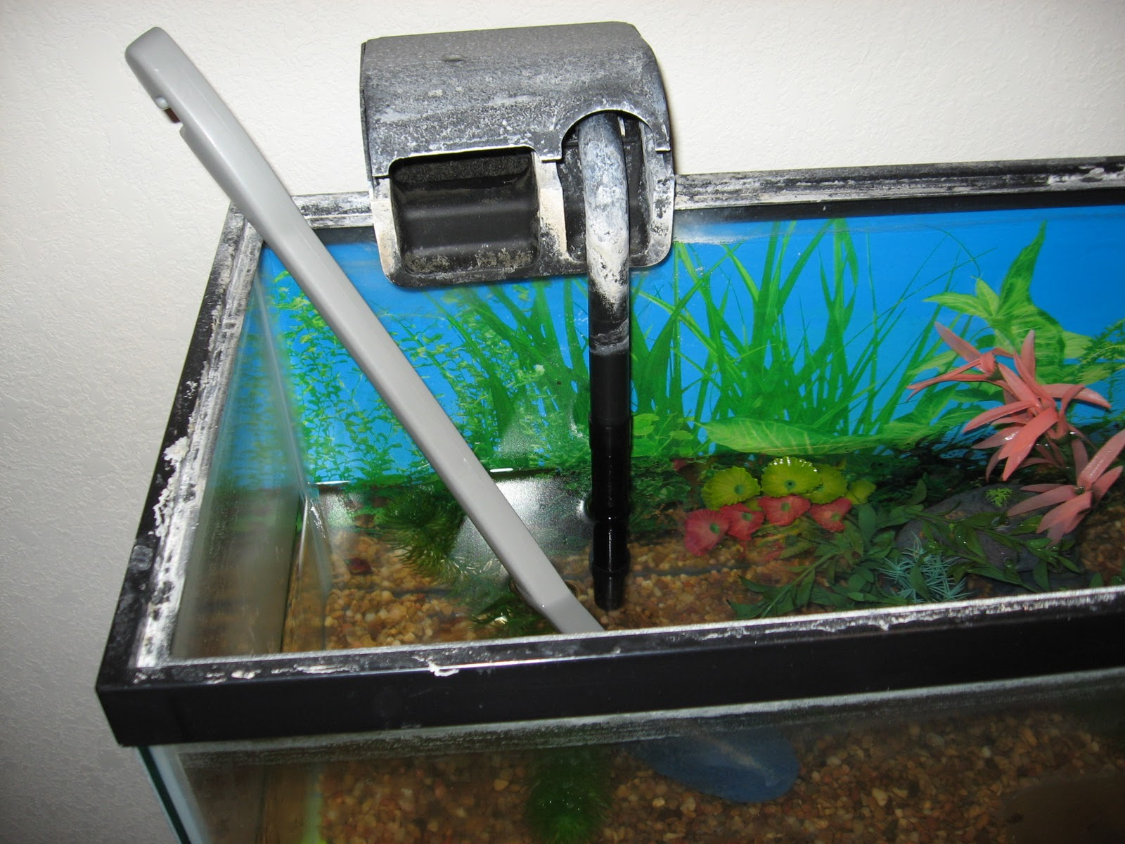 Guide for buying tanks and supplies secondhand my world for Fish tank cleaning kit