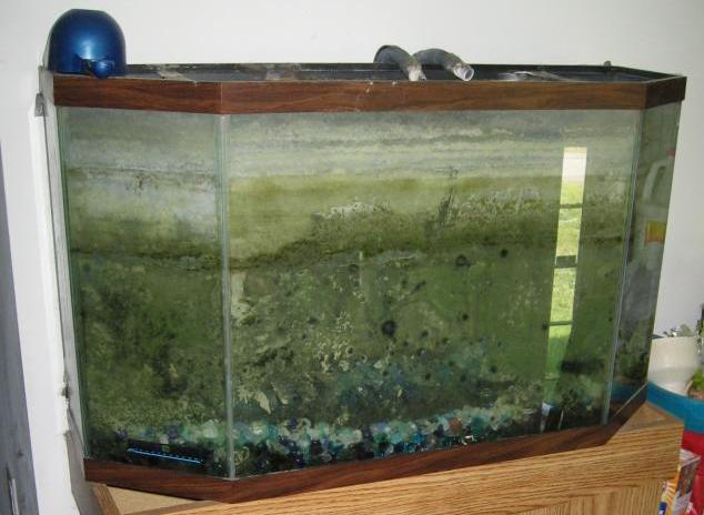 My world of planted freshwater aquariums for How often do you clean a fish tank